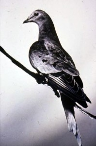 The Death of Martha, the Last Passenger Pigeon on Earth
